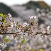 緑の葉とピンクの花のコントラスト