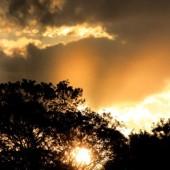 樹間背後の日の出
