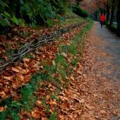 晩秋の ジョギング
