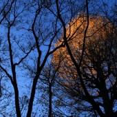 樹間に 輝く