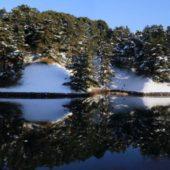 雪の桜田濠 映り込みの 造形美