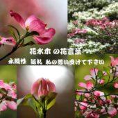花水木の 花言葉