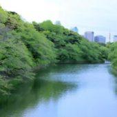 早い 新緑の訪れ 千鳥ヶ淵