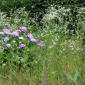 白と 紫の 競演