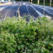 高速道路をも 蝕む 雑草の力?