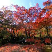 紅葉(北の丸公園)